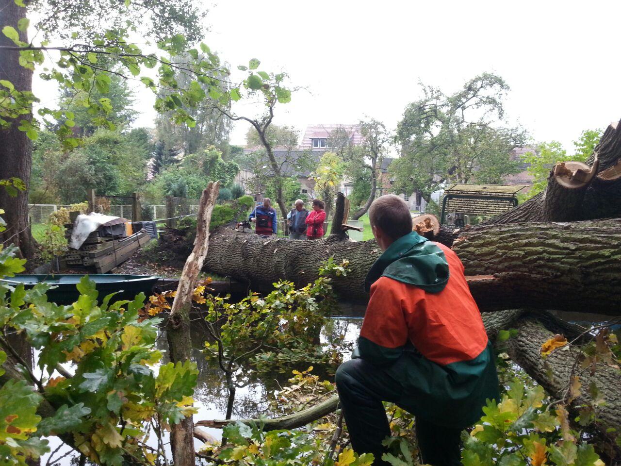 Mitarbeiter des Verbands beseitigen im Auftrag des LUGV Brandenburg eine umgebrochene Eiche am Hegensteinbach